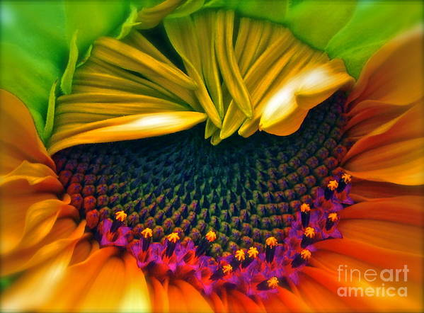 Sunflower Photograph Art Print featuring the photograph Sunflower Smoothie by Gwyn Newcombe