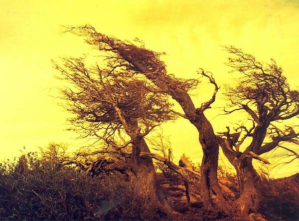 Trees Art Print featuring the photograph Wicked Trees by Linda Russell