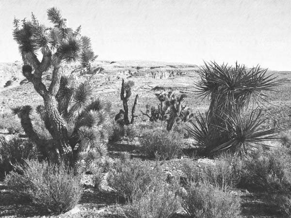 Pencil Art Print featuring the photograph Desert Greenery by Frank Wilson