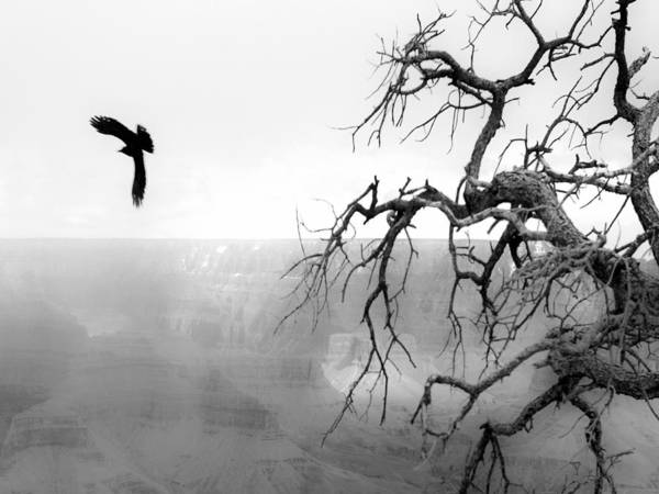 Travel Art Print featuring the photograph Raven In Grand Canyon by Luc Novovitch
