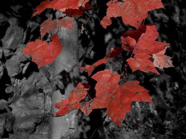 Nature; Pennsylvania; United States; Fall Foliage Art Print featuring the photograph Fall Foliage In Pennsylvania by Bob Hahn
