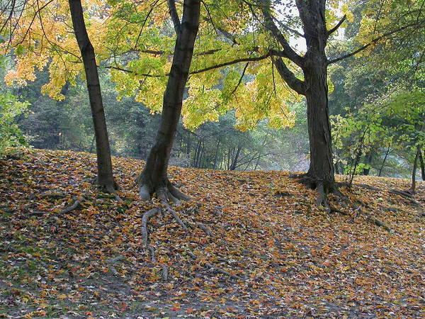 Autumn Art Print featuring the photograph Fall In Stony Brook by Raju Alagawadi