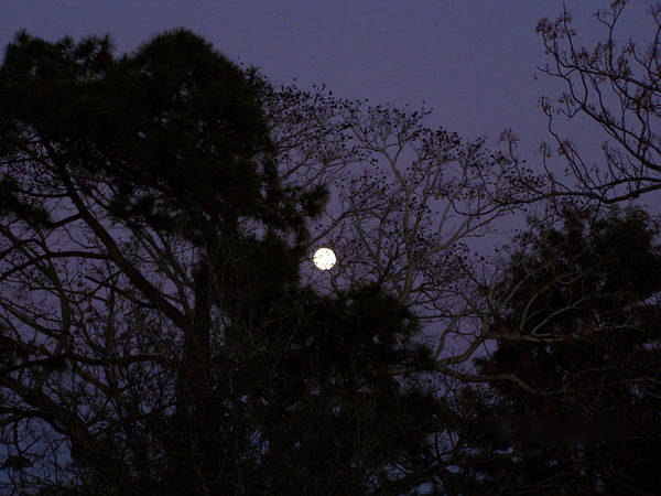 Moon Rise Photography Sky Photography Trees Photography Evening Photograph Winter Photography Art Print featuring the photograph Moon Rise by Evelyn Patrick