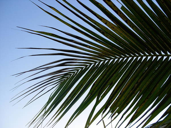 Palm Tree Art Print featuring the photograph Palms To The Sky by Amanda Vouglas