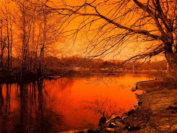 Landscape Art Print featuring the photograph Studying The Sunset by Kendall Eutemey