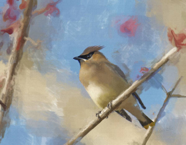 Nature Art Print featuring the photograph Waxwing Beauty by Helen Ellis