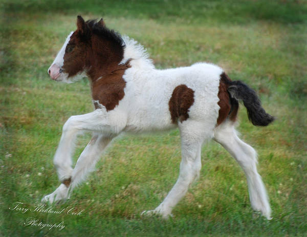 Horse Art Print featuring the photograph Just The Cutest Filly by Terry Kirkland Cook