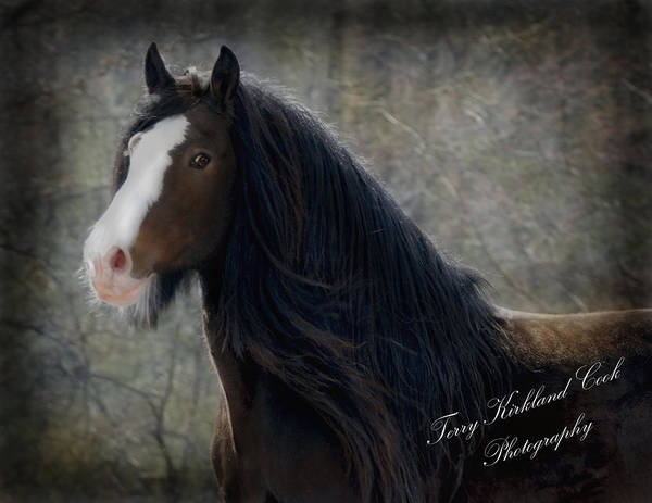 Equine Art Print featuring the photograph Powerful Paul by Terry Kirkland Cook