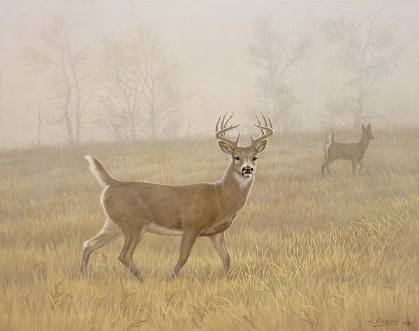 Wildlife Art Print featuring the painting Foggy Morning-whitetail by Paul Krapf