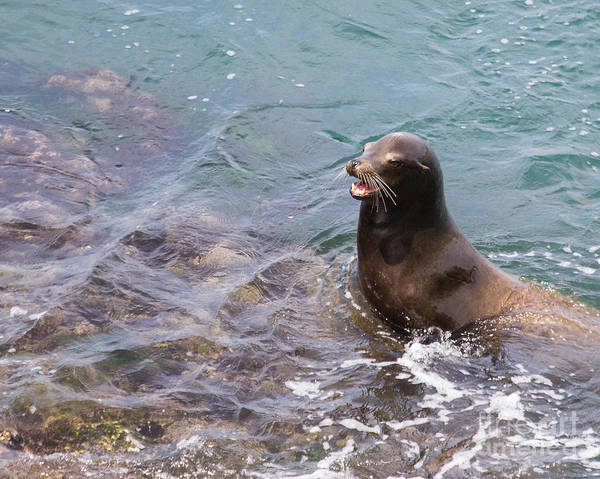 Sea Art Print featuring the photograph Sea Lion Smile by Dale Nelson