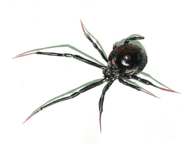 Spider Art Print featuring the painting The Devil Wears Pink Toe Nails. by Richard Brooks