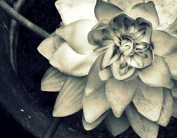 Flower Art Print featuring the photograph Beauty Among The Ashes by Shawna Gibson