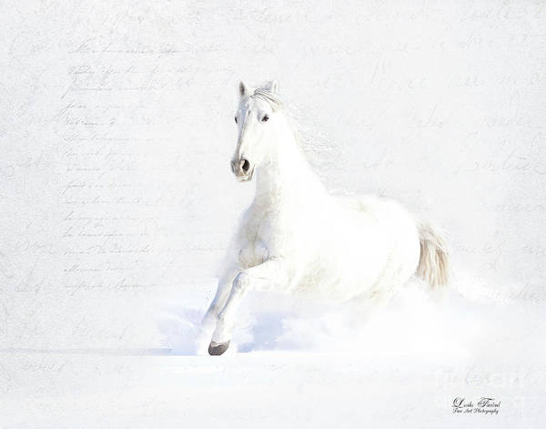 Horses Art Print featuring the photograph Spirit Of Freedom by Linda Finstad