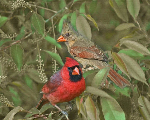 Nature Art Print featuring the photograph Pair Of Cardinals by Helen Ellis