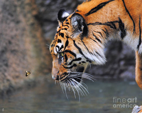 Animal Art Print featuring the photograph Risk Taker by Jai Johnson