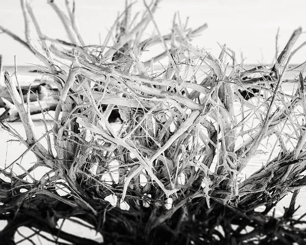 Beach Art Print featuring the photograph The Roots In Black And White by Lisa Russo