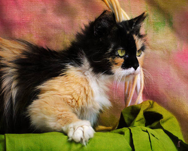 Calico Art Print featuring the photograph Calico Cat In Basket by Jai Johnson