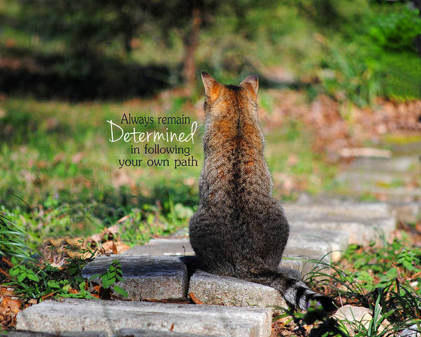Cat Art Print featuring the photograph Determined Encouraging Cat Photo by Jai Johnson