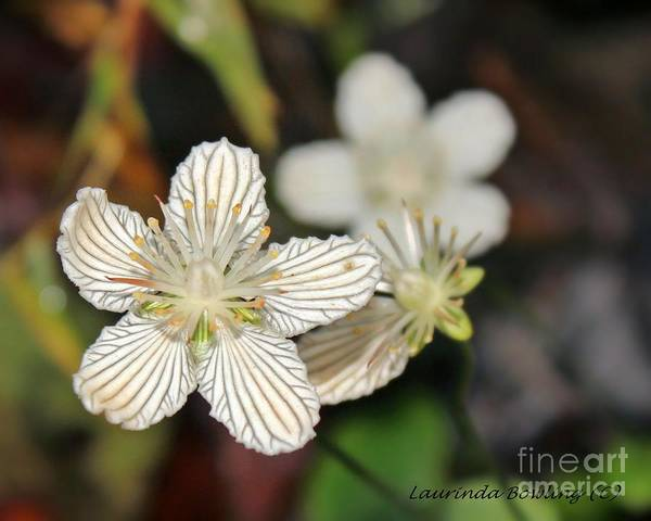 Flower Art Print featuring the photograph Little Wildflower by Laurinda Bowling