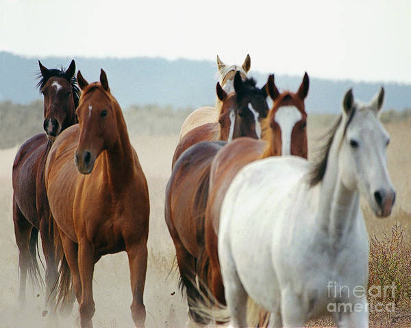 Horses Art Print featuring the photograph Form Two Lines by Don Schimmel