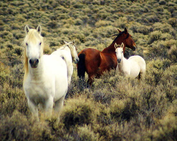 Horses Art Print featuring the photograph Nevada Wild Horses by Marty Koch