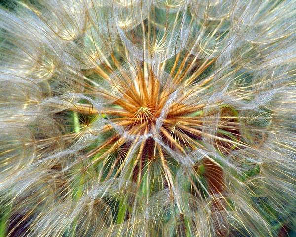 Wildflower Art Print featuring the photograph Seeds by Marty Koch