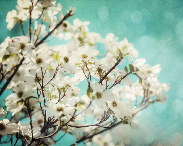 Floral Art Print featuring the photograph Teal Dogwood No. 1 by Lisa Russo