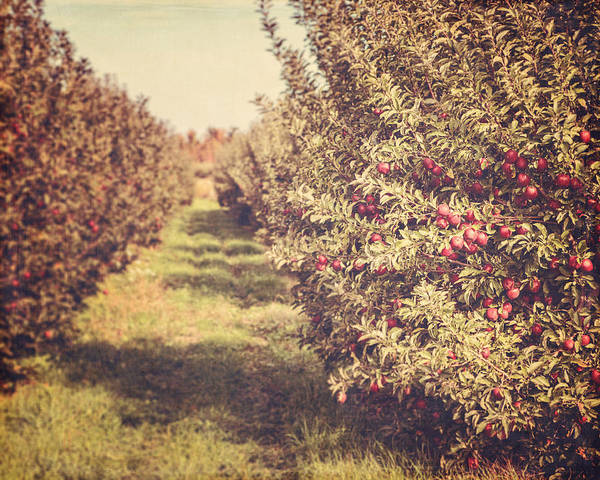 Orchard Art Print featuring the photograph The Orchard by Lisa Russo