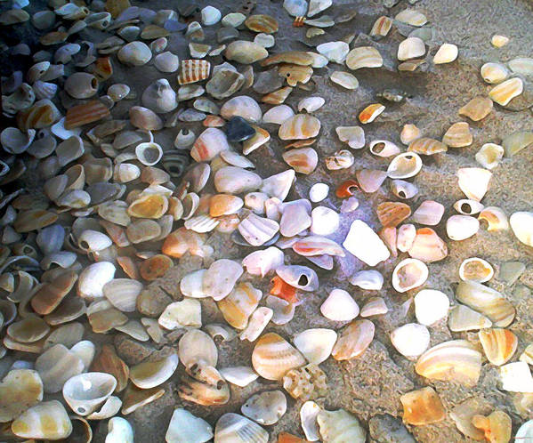 Photography Art Print featuring the painting Sea Shells by Evelyn Patrick