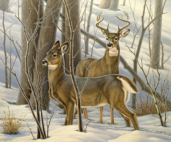 Wildlife Art Print featuring the painting Ready - Whitetail Deer by Paul Krapf