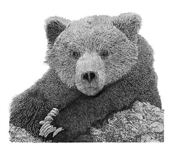 Pen Art Print featuring the drawing Bear 2 by David Doucot