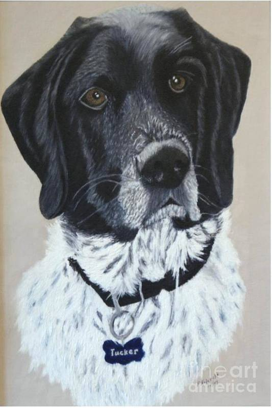 Dog Portrait Paintings Art Print featuring the painting Tucker by Peggy Holcroft