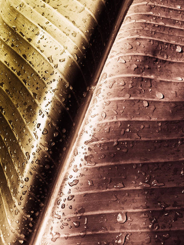 Rain Art Print featuring the photograph Copper Raindrops by Joe Carini