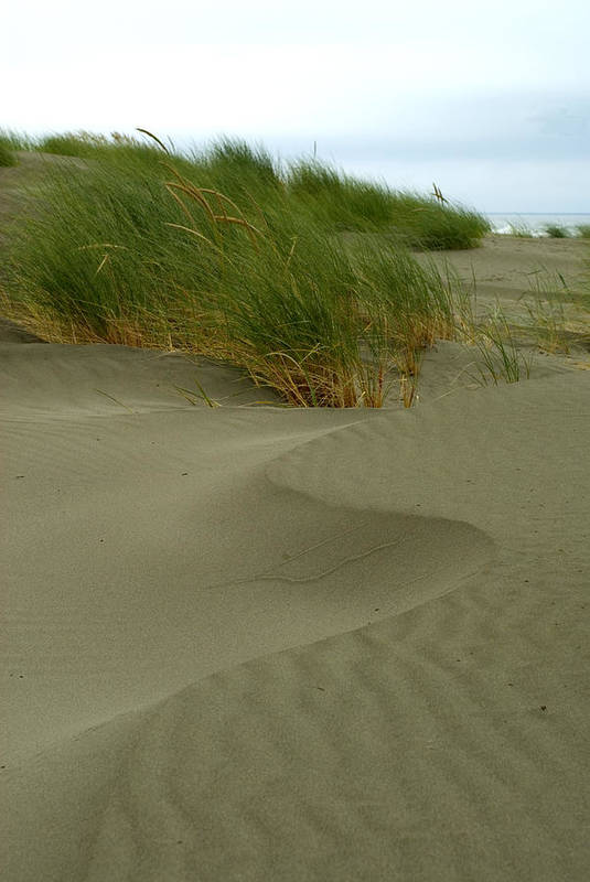 Beach Art Print featuring the photograph Beach Grass by Jessica Wakefield