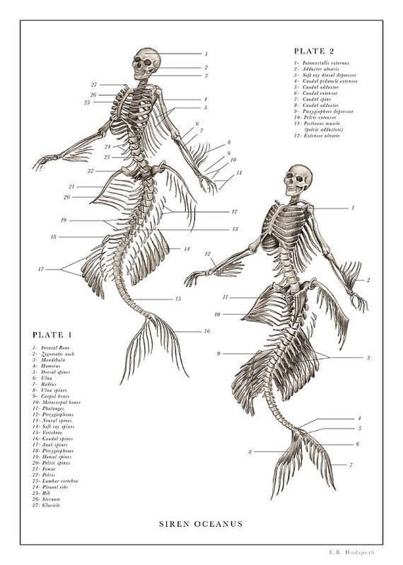 Mermaid Print 1, 2... by EB Hudspeth