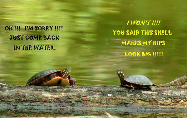 Turtle Art Print featuring the photograph 072610-2  Trouble In Paradise by Mike Davis