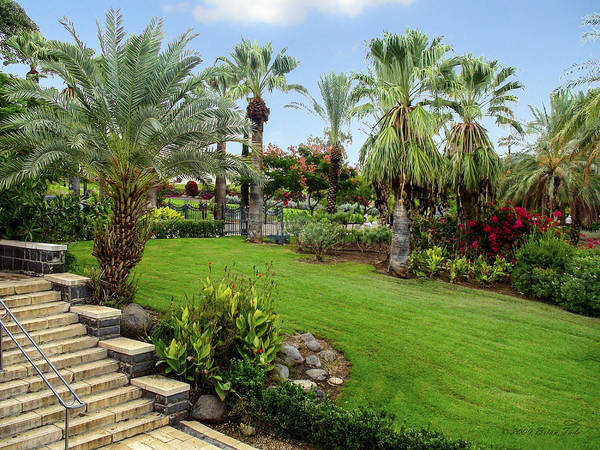Gardens at Mount of Beatitudes Israel by Brian Tada