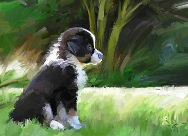 Aussie Dog Collie Art Print featuring the digital art Ku'uipo by Scott Waters