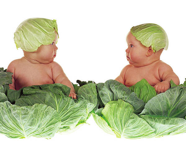 Cabbage Kids by Anne Geddes