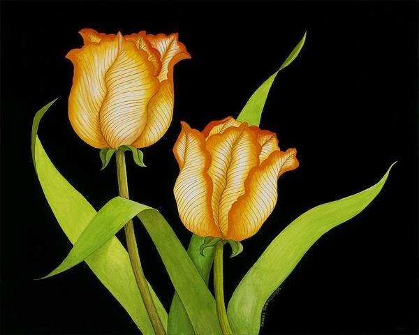 Two Orange-yellow Tulips Posing On A Black Background Art Print featuring the painting Posing Tulips by Carol Sabo