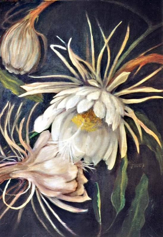 Flower Art Print featuring the painting Night Bloomer by Jimmie Trotter