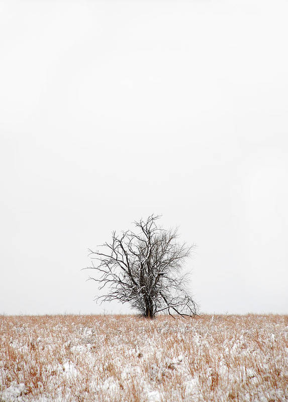 Snow Art Print featuring the photograph Lonely by Jessica Wakefield