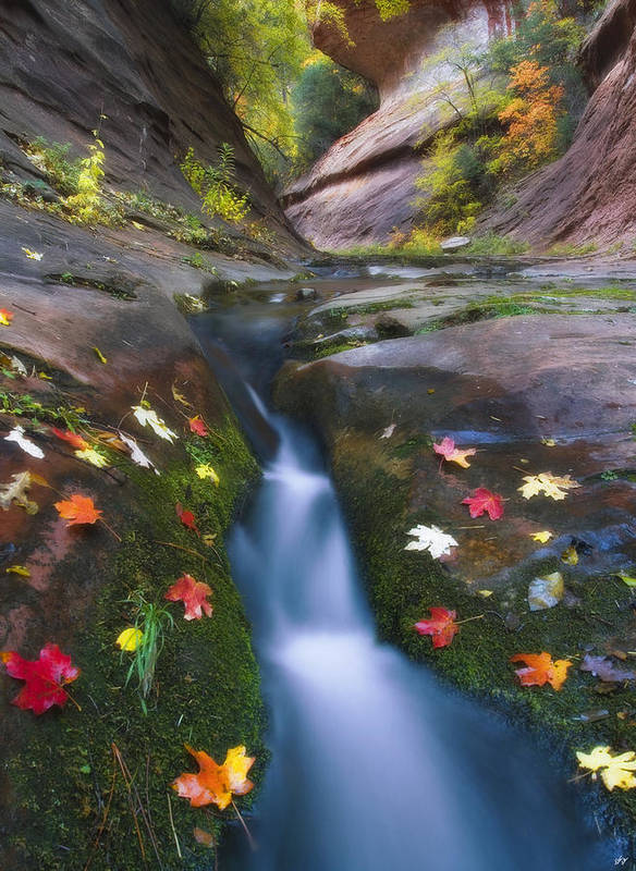 Oak Creek Canyon Art Print featuring the photograph Cut Into Autumn by Peter Coskun