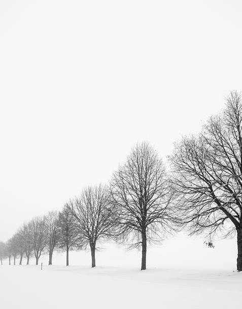 Avenue with row of trees in winter by Matthias Hauser