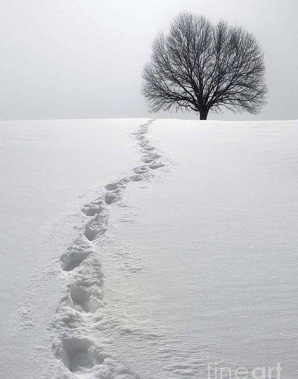 Snowy Path by Diane Diederich