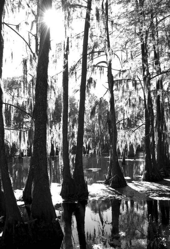 Bayou Art Print featuring the photograph Bayou by Jessica Wakefield