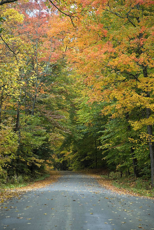 Foliage Art Print featuring the photograph New England Road by Jessica Wakefield