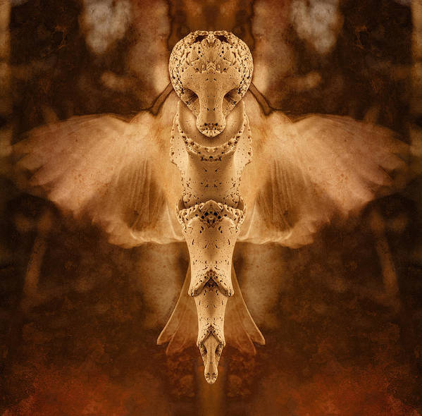 Wings Art Print featuring the photograph Sea Spirit 2 by WB Johnston