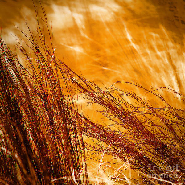 Nature Art Print featuring the photograph Prairie Winds by Catherine Fenner