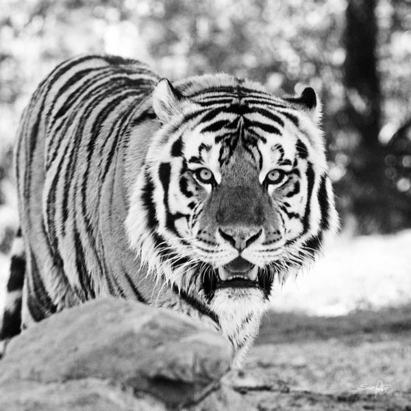 Tiger Art Print featuring the photograph His Majesty by Scott Pellegrin